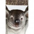 Kare Design Bijzettafel Koala Ø33cm