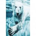 Zooff Poster Frame Alu Swimming Polar Bear 80x20cm